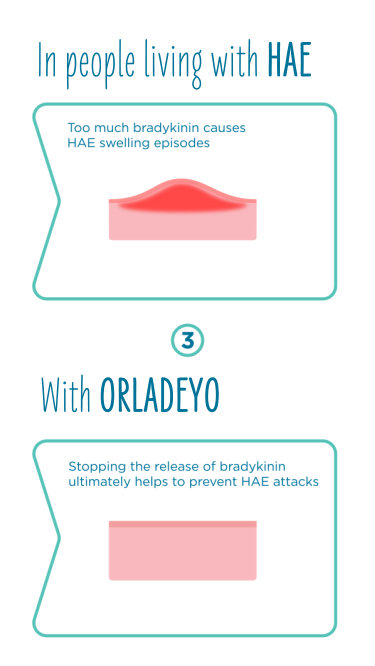How ORLADEYO™ works to prevent HAE attacks